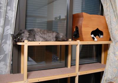 cats310b