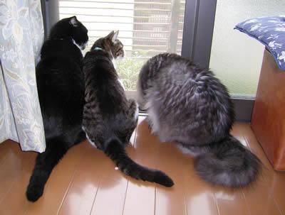 cats351.jpg