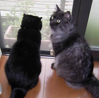 cats353.jpg