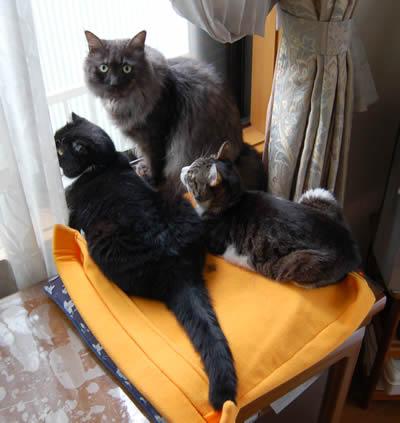 cats376.jpg