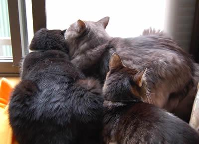cats379.jpg