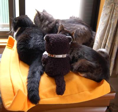 cats380.jpg