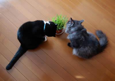 cats388.jpg
