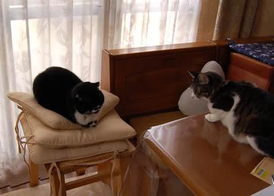 cats427