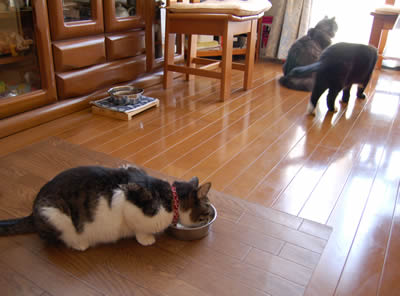 cats582