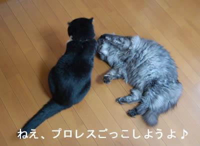 cats661.jpg
