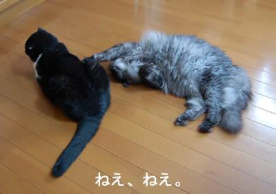 cats663.jpg