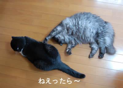 cats664.jpg