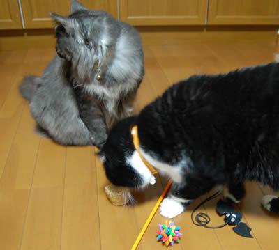 cats677.jpg