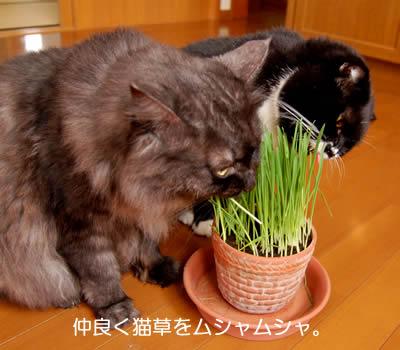 cats687.jpg