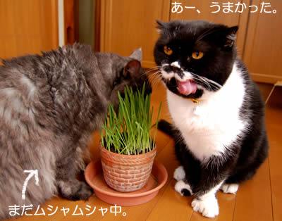 cats690.jpg