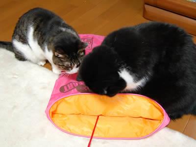 cats740.jpg