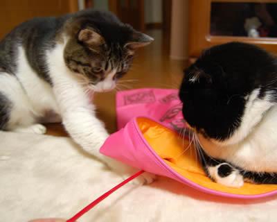 cats746.jpg