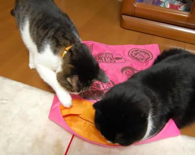 cats750.jpg