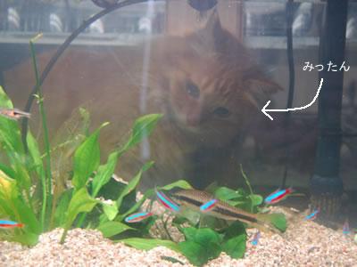 魚を移したばかりの水槽に早くもみったん登場