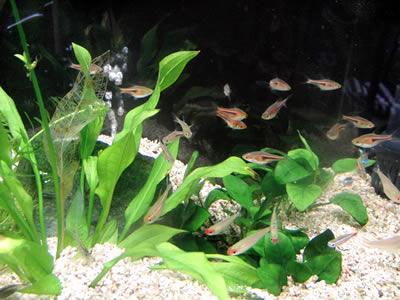 水も透明になって、落ち着きを取り戻した魚たち