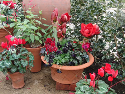 バラクライングリッシュバーデンの赤いい庭