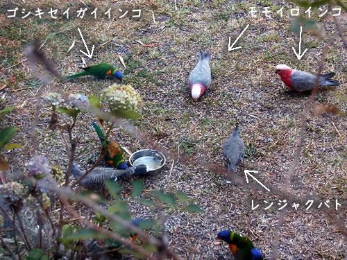 庭に餌を食べにきた鳥たち