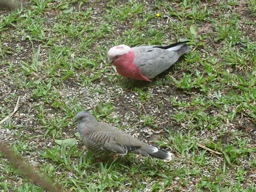 庭に来た鳥