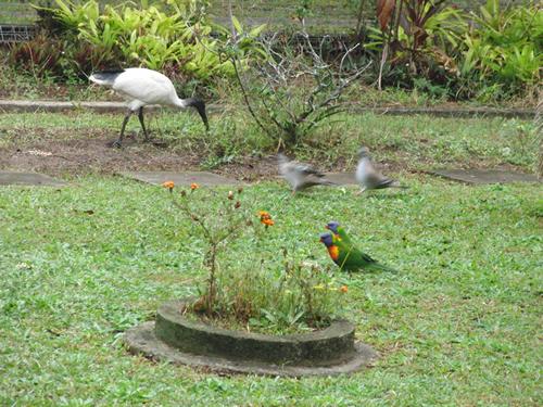 朝ご飯を食べる鳥たち