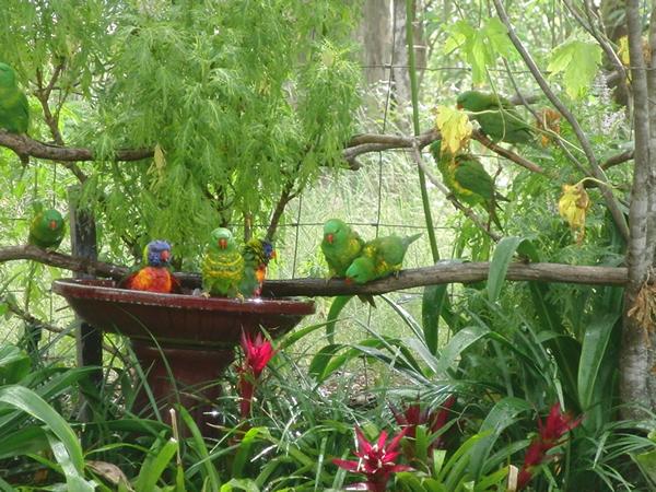 庭の水飲み場に来た鳥たち