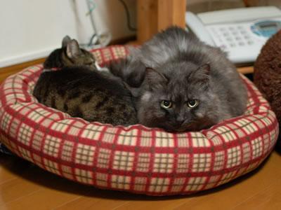 いっしょに猫ベッドにいるケメコとモコにゃん