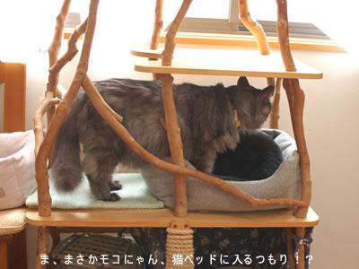 猫ベッドに入ろうとするモコにゃん