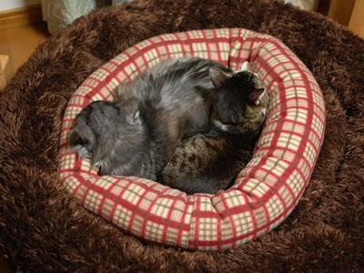 二重の猫ベッド