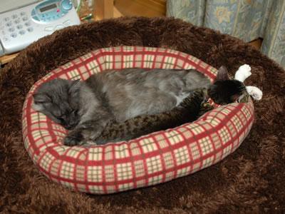 二重の猫ベッドの中のケメコとモコにゃん