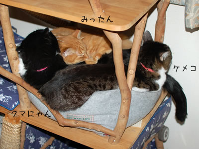3匹でみっちり猫ベッド