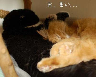ひとつの猫ベッドで眠る2匹