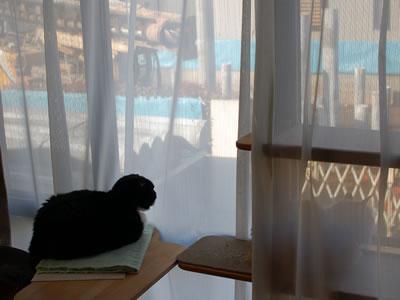 窓の外の工事を見物するクマにゃんとみったん