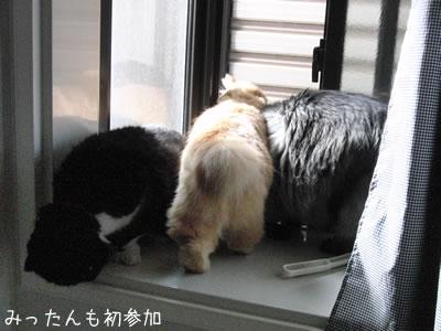 お風呂場の出窓の3匹