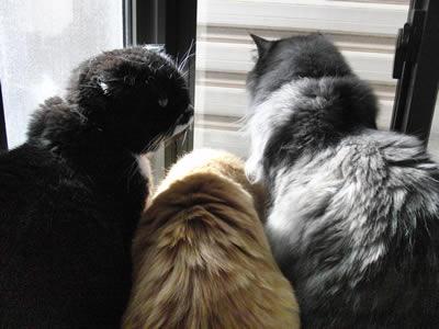出窓大好きの 3匹