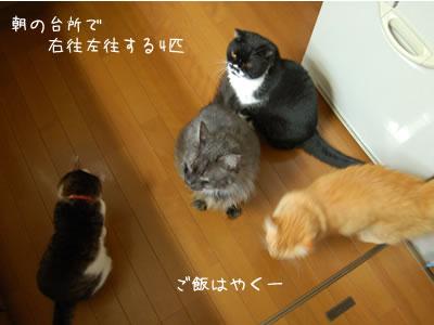 朝、台所で右往左往する4匹「ご飯はやくー」