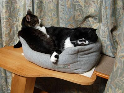 猫ベッドの中のクマにゃんとケメコ