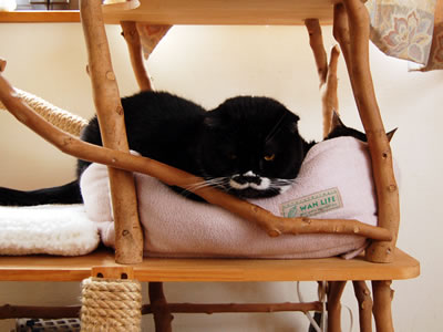 猫ベッドの中のケメコとクマにゃん