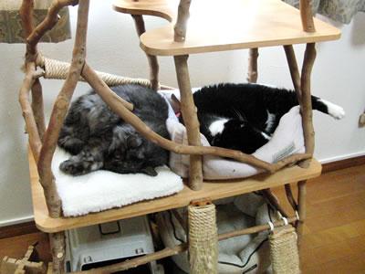 猫ベッドで眠るクマにゃん、どうしても足がはみ出しちゃう