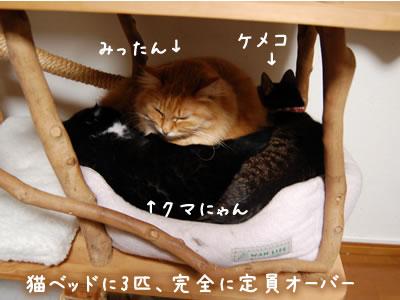 3匹でひとつの猫ベッド、さすがにきつい