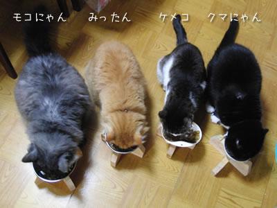 食事中の4匹