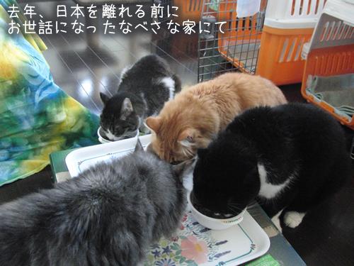 日本を発つ前の4匹の様子(食事風景)