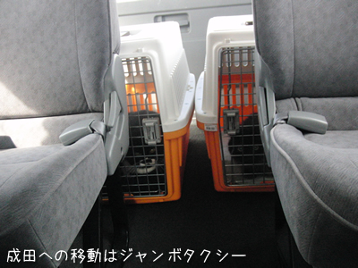 成田へ向かうためジャンボタクシーに乗った4匹