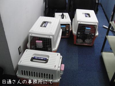 猫の輸送をお願いした日通さんの成田事務所にて