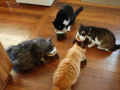 朝ごはんを食べる4匹