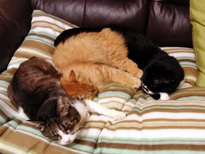 寒くなってきた今日この頃、くっつく猫たち