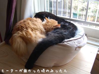 猫ベッドでくっついて眠る、クマにゃんとみったん