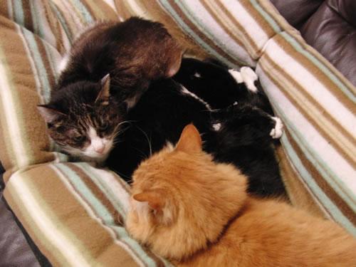 3匹でくっついて昼寝