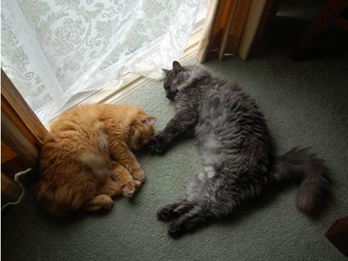 窓辺でお昼寝中の2匹