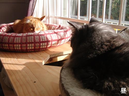 日中はお日様があたる猫棚の上で昼寝