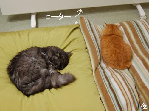 夜はヒーターの前のクッションの上で眠る